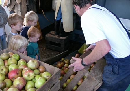 apples-796.jpg