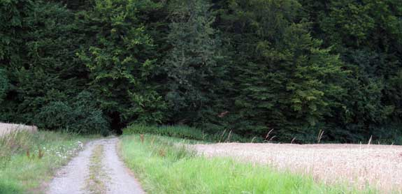 end-road-35.jpg