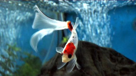 fish-e.jpg