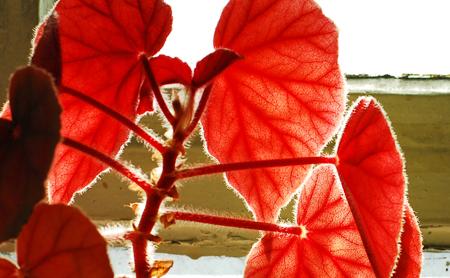 geranium-2.jpg