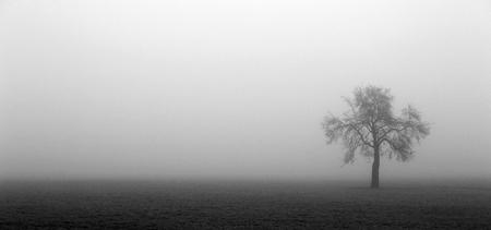 halsbach-tree-284.jpg