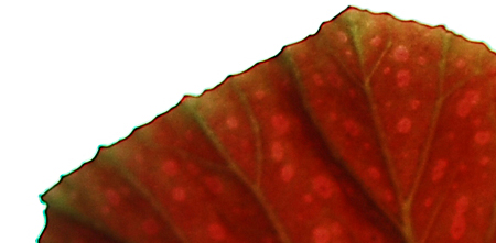 leaf-15-detail.jpg