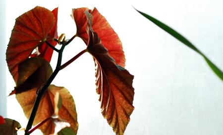 leaf-15.jpg