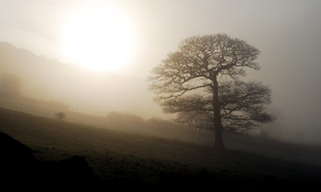 mist-tree.jpg