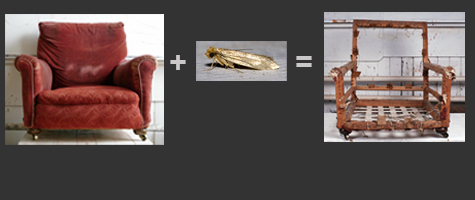 moth-equation.jpg