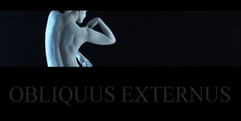 obliquus.jpg