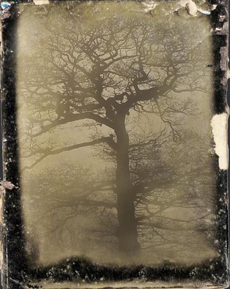 old-tree-54a.jpg