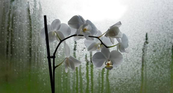 orchid-340.jpg