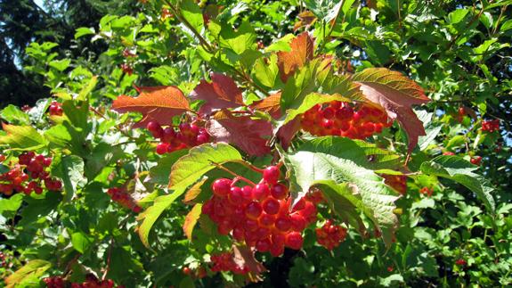 rot-berries.jpg