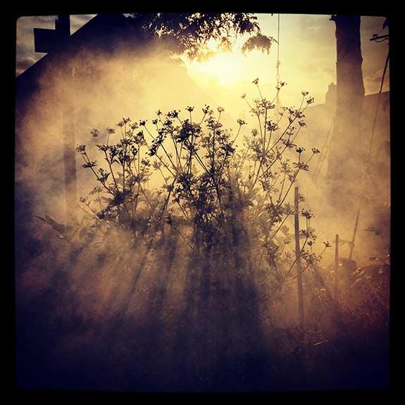 smoke-&-herbs-inst.jpg