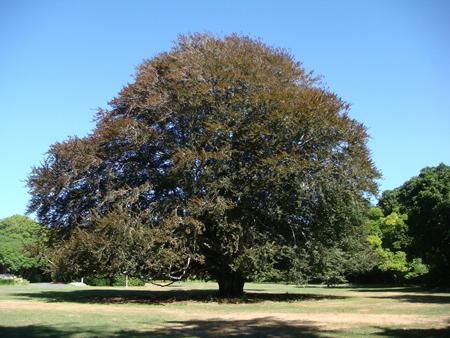 specimen-tree.jpg