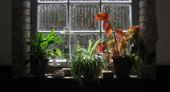 spring-window.jpg