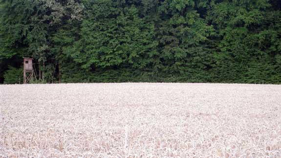 wheat-34.jpg