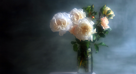 whiterose-19.jpg